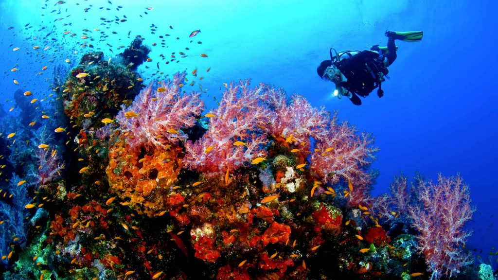Diving south sardinia